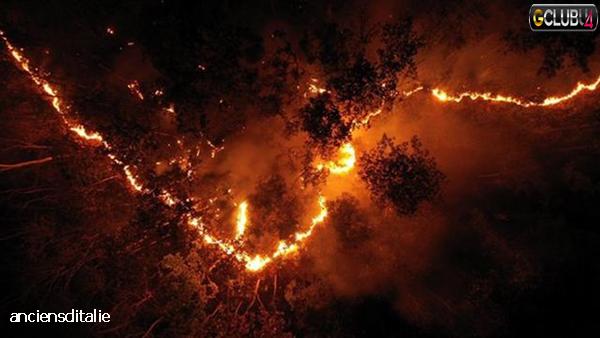 ไฟป่าเกิดขึ้นได้อย่างไร
