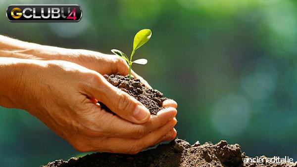 ประโยชน์ของการปลูกต้นไม้